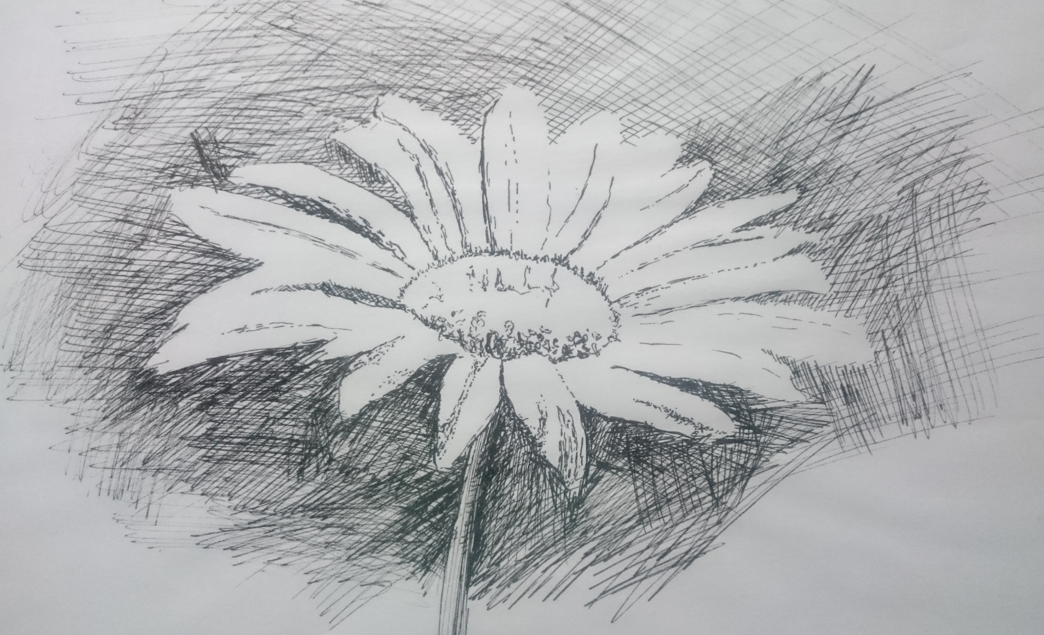 Daisy Flower Line Drawing : Drawing and painting classes